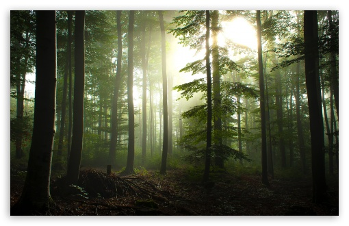 Coniferous Forest HD wallpaper for Wide 16:10 5:3 Widescreen WHXGA WQXGA WUXGA WXGA WGA ; HD 16:9 High Definition WQHD QWXGA 1080p 900p 720p QHD nHD ; Standard 4:3 5:4 3:2 Fullscreen UXGA XGA SVGA QSXGA SXGA DVGA HVGA HQVGA devices ( Apple PowerBook G4 iPhone 4 3G 3GS iPod Touch ) ; Tablet 1:1 ; iPad 1/2/Mini ; Mobile 4:3 5:3 3:2 16:9 5:4 - UXGA XGA SVGA WGA DVGA HVGA HQVGA devices ( Apple PowerBook G4 iPhone 4 3G 3GS iPod Touch ) WQHD QWXGA 1080p 900p 720p QHD nHD QSXGA SXGA ;