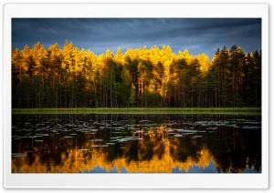 Coniferous Forest, Golden Sunlight, Dark Stormy Sky HD Wide Wallpaper for 4K UHD Widescreen desktop & smartphone