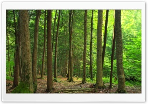 Coniferous Forest Hike HD Wide Wallpaper for Widescreen