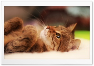 Cool Cat HD Wide Wallpaper for Widescreen