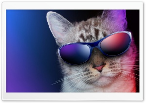 Cool Cat HD Wide Wallpaper for 4K UHD Widescreen desktop & smartphone