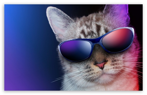 Cool Cat ❤ 4K UHD Wallpaper for Wide 16:10 5:3 Widescreen WHXGA WQXGA WUXGA WXGA WGA ; UltraWide 21:9 24:10 ; 4K UHD 16:9 Ultra High Definition 2160p 1440p 1080p 900p 720p ; UHD 16:9 2160p 1440p 1080p 900p 720p ; Standard 4:3 5:4 3:2 Fullscreen UXGA XGA SVGA QSXGA SXGA DVGA HVGA HQVGA ( Apple PowerBook G4 iPhone 4 3G 3GS iPod Touch ) ; Tablet 1:1 ; iPad 1/2/Mini ; Mobile 4:3 5:3 3:2 16:9 5:4 - UXGA XGA SVGA WGA DVGA HVGA HQVGA ( Apple PowerBook G4 iPhone 4 3G 3GS iPod Touch ) 2160p 1440p 1080p 900p 720p QSXGA SXGA ;