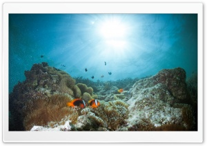 Coral Reef HD Wide Wallpaper for Widescreen