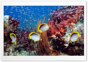 Coral Reef And Tropical Fish HD Wide Wallpaper for Widescreen
