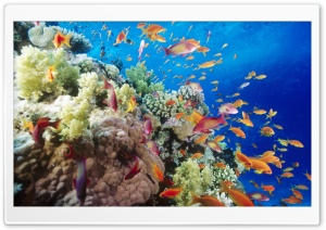 Coral Reef Southern Red Sea Near Safaga Egypt HD Wide Wallpaper for Widescreen