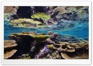 Corals - Palmyra Atoll National Wildlife Refuge HD Wide Wallpaper for Widescreen