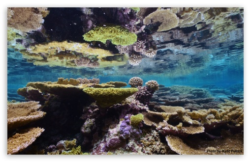 Download Corals - Palmyra Atoll National Wildlife Refuge UltraHD Wallpaper