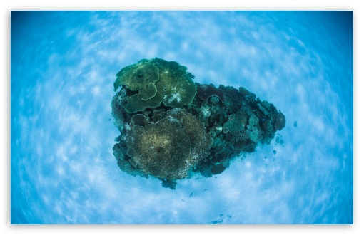 Corals Underwater ❤ 4K UHD Wallpaper for Wide 16:10 5:3 Widescreen WHXGA WQXGA WUXGA WXGA WGA ; UltraWide 21:9 24:10 ; 4K UHD 16:9 Ultra High Definition 2160p 1440p 1080p 900p 720p ; UHD 16:9 2160p 1440p 1080p 900p 720p ; Standard 4:3 5:4 3:2 Fullscreen UXGA XGA SVGA QSXGA SXGA DVGA HVGA HQVGA ( Apple PowerBook G4 iPhone 4 3G 3GS iPod Touch ) ; Smartphone 16:9 3:2 5:3 2160p 1440p 1080p 900p 720p DVGA HVGA HQVGA ( Apple PowerBook G4 iPhone 4 3G 3GS iPod Touch ) WGA ; Tablet 1:1 ; iPad 1/2/Mini ; Mobile 4:3 5:3 3:2 16:9 5:4 - UXGA XGA SVGA WGA DVGA HVGA HQVGA ( Apple PowerBook G4 iPhone 4 3G 3GS iPod Touch ) 2160p 1440p 1080p 900p 720p QSXGA SXGA ;