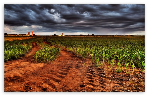 Corn Plantation HDR HD wallpaper for Wide 16:10 5:3 Widescreen WHXGA WQXGA WUXGA WXGA WGA ; HD 16:9 High Definition WQHD QWXGA 1080p 900p 720p QHD nHD ; Standard 4:3 5:4 3:2 Fullscreen UXGA XGA SVGA QSXGA SXGA DVGA HVGA HQVGA devices ( Apple PowerBook G4 iPhone 4 3G 3GS iPod Touch ) ; Tablet 1:1 ; iPad 1/2/Mini ; Mobile 4:3 5:3 3:2 16:9 5:4 - UXGA XGA SVGA WGA DVGA HVGA HQVGA devices ( Apple PowerBook G4 iPhone 4 3G 3GS iPod Touch ) WQHD QWXGA 1080p 900p 720p QHD nHD QSXGA SXGA ;