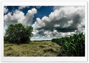 Cornfield Cloudy Sky HD Wide Wallpaper for Widescreen