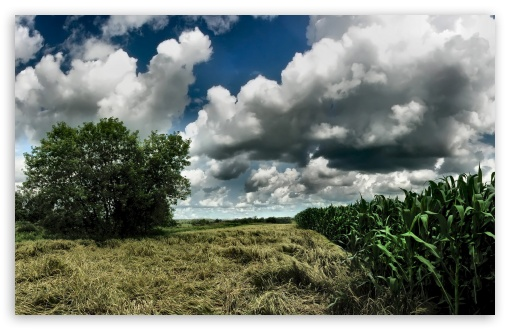 Cornfield Cloudy Sky HD wallpaper for Wide 16:10 5:3 Widescreen WHXGA WQXGA WUXGA WXGA WGA ; HD 16:9 High Definition WQHD QWXGA 1080p 900p 720p QHD nHD ; Standard 4:3 5:4 3:2 Fullscreen UXGA XGA SVGA QSXGA SXGA DVGA HVGA HQVGA devices ( Apple PowerBook G4 iPhone 4 3G 3GS iPod Touch ) ; Tablet 1:1 ; iPad 1/2/Mini ; Mobile 4:3 5:3 3:2 16:9 5:4 - UXGA XGA SVGA WGA DVGA HVGA HQVGA devices ( Apple PowerBook G4 iPhone 4 3G 3GS iPod Touch ) WQHD QWXGA 1080p 900p 720p QHD nHD QSXGA SXGA ;