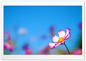 Cosmos Pofile HD Wide Wallpaper for Widescreen