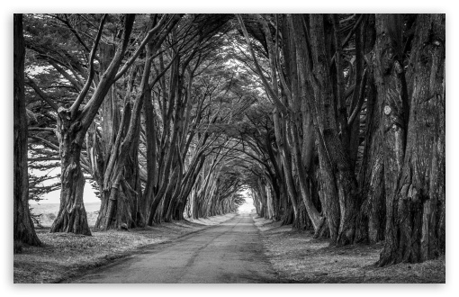 Country Road, Aligned Trees, Black and White ❤ 4K UHD Wallpaper for Wide 16:10 5:3 Widescreen WHXGA WQXGA WUXGA WXGA WGA ; UltraWide 21:9 ; 4K UHD 16:9 Ultra High Definition 2160p 1440p 1080p 900p 720p ; Standard 4:3 5:4 3:2 Fullscreen UXGA XGA SVGA QSXGA SXGA DVGA HVGA HQVGA ( Apple PowerBook G4 iPhone 4 3G 3GS iPod Touch ) ; Smartphone 16:9 3:2 5:3 2160p 1440p 1080p 900p 720p DVGA HVGA HQVGA ( Apple PowerBook G4 iPhone 4 3G 3GS iPod Touch ) WGA ; Tablet 1:1 ; iPad 1/2/Mini ; Mobile 4:3 5:3 3:2 16:9 5:4 - UXGA XGA SVGA WGA DVGA HVGA HQVGA ( Apple PowerBook G4 iPhone 4 3G 3GS iPod Touch ) 2160p 1440p 1080p 900p 720p QSXGA SXGA ; Dual 16:10 5:3 16:9 4:3 5:4 3:2 WHXGA WQXGA WUXGA WXGA WGA 2160p 1440p 1080p 900p 720p UXGA XGA SVGA QSXGA SXGA DVGA HVGA HQVGA ( Apple PowerBook G4 iPhone 4 3G 3GS iPod Touch ) ;