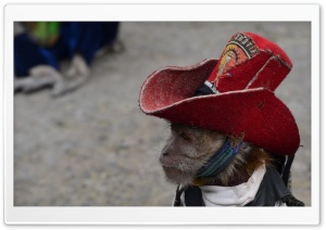 Cowboy Monkey HD Wide Wallpaper for Widescreen