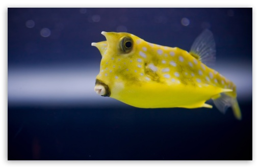 Cowfish ❤ 4K UHD Wallpaper for Wide 16:10 5:3 Widescreen WHXGA WQXGA WUXGA WXGA WGA ; UltraWide 21:9 24:10 ; 4K UHD 16:9 Ultra High Definition 2160p 1440p 1080p 900p 720p ; UHD 16:9 2160p 1440p 1080p 900p 720p ; Standard 4:3 5:4 3:2 Fullscreen UXGA XGA SVGA QSXGA SXGA DVGA HVGA HQVGA ( Apple PowerBook G4 iPhone 4 3G 3GS iPod Touch ) ; Smartphone 16:9 3:2 5:3 2160p 1440p 1080p 900p 720p DVGA HVGA HQVGA ( Apple PowerBook G4 iPhone 4 3G 3GS iPod Touch ) WGA ; Tablet 1:1 ; iPad 1/2/Mini ; Mobile 4:3 5:3 3:2 16:9 5:4 - UXGA XGA SVGA WGA DVGA HVGA HQVGA ( Apple PowerBook G4 iPhone 4 3G 3GS iPod Touch ) 2160p 1440p 1080p 900p 720p QSXGA SXGA ;