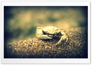 Crab Ultra HD Wallpaper for 4K UHD Widescreen desktop, tablet & smartphone