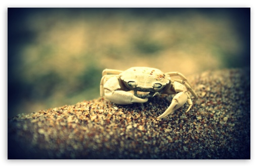 Crab HD wallpaper for Wide 16:10 5:3 Widescreen WHXGA WQXGA WUXGA WXGA WGA ; HD 16:9 High Definition WQHD QWXGA 1080p 900p 720p QHD nHD ; UHD 16:9 WQHD QWXGA 1080p 900p 720p QHD nHD ; Standard 4:3 5:4 3:2 Fullscreen UXGA XGA SVGA QSXGA SXGA DVGA HVGA HQVGA devices ( Apple PowerBook G4 iPhone 4 3G 3GS iPod Touch ) ; Tablet 1:1 ; iPad 1/2/Mini ; Mobile 4:3 5:3 3:2 16:9 5:4 - UXGA XGA SVGA WGA DVGA HVGA HQVGA devices ( Apple PowerBook G4 iPhone 4 3G 3GS iPod Touch ) WQHD QWXGA 1080p 900p 720p QHD nHD QSXGA SXGA ; Dual 16:10 5:3 16:9 4:3 5:4 WHXGA WQXGA WUXGA WXGA WGA WQHD QWXGA 1080p 900p 720p QHD nHD UXGA XGA SVGA QSXGA SXGA ;