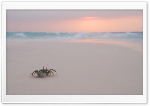 Crab On Beach HD Wide Wallpaper for Widescreen