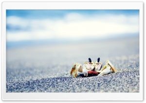 Crab On Sea HD Wide Wallpaper for 4K UHD Widescreen desktop & smartphone