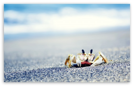 Crab On Sea HD wallpaper for Wide 16:10 5:3 Widescreen WHXGA WQXGA WUXGA WXGA WGA ; HD 16:9 High Definition WQHD QWXGA 1080p 900p 720p QHD nHD ; Standard 4:3 5:4 3:2 Fullscreen UXGA XGA SVGA QSXGA SXGA DVGA HVGA HQVGA devices ( Apple PowerBook G4 iPhone 4 3G 3GS iPod Touch ) ; Tablet 1:1 ; iPad 1/2/Mini ; Mobile 4:3 5:3 3:2 16:9 5:4 - UXGA XGA SVGA WGA DVGA HVGA HQVGA devices ( Apple PowerBook G4 iPhone 4 3G 3GS iPod Touch ) WQHD QWXGA 1080p 900p 720p QHD nHD QSXGA SXGA ; Dual 16:10 5:3 16:9 4:3 5:4 WHXGA WQXGA WUXGA WXGA WGA WQHD QWXGA 1080p 900p 720p QHD nHD UXGA XGA SVGA QSXGA SXGA ;