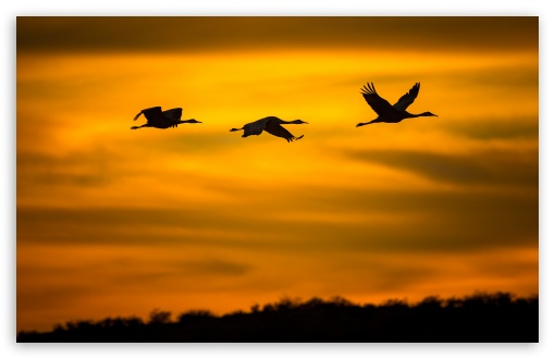 Cranes Birds in Flight ❤ 4K UHD Wallpaper for Wide 16:10 5:3 Widescreen WHXGA WQXGA WUXGA WXGA WGA ; UltraWide 21:9 24:10 ; 4K UHD 16:9 Ultra High Definition 2160p 1440p 1080p 900p 720p ; UHD 16:9 2160p 1440p 1080p 900p 720p ; Standard 4:3 5:4 3:2 Fullscreen UXGA XGA SVGA QSXGA SXGA DVGA HVGA HQVGA ( Apple PowerBook G4 iPhone 4 3G 3GS iPod Touch ) ; Smartphone 16:9 3:2 5:3 2160p 1440p 1080p 900p 720p DVGA HVGA HQVGA ( Apple PowerBook G4 iPhone 4 3G 3GS iPod Touch ) WGA ; Tablet 1:1 ; iPad 1/2/Mini ; Mobile 4:3 5:3 3:2 16:9 5:4 - UXGA XGA SVGA WGA DVGA HVGA HQVGA ( Apple PowerBook G4 iPhone 4 3G 3GS iPod Touch ) 2160p 1440p 1080p 900p 720p QSXGA SXGA ; Dual 16:10 5:3 16:9 4:3 5:4 3:2 WHXGA WQXGA WUXGA WXGA WGA 2160p 1440p 1080p 900p 720p UXGA XGA SVGA QSXGA SXGA DVGA HVGA HQVGA ( Apple PowerBook G4 iPhone 4 3G 3GS iPod Touch ) ; Triple 16:10 5:3 16:9 4:3 5:4 3:2 WHXGA WQXGA WUXGA WXGA WGA 2160p 1440p 1080p 900p 720p UXGA XGA SVGA QSXGA SXGA DVGA HVGA HQVGA ( Apple PowerBook G4 iPhone 4 3G 3GS iPod Touch ) ;