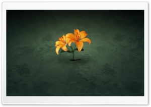 Creative Orange Flowers HD Wide Wallpaper for Widescreen