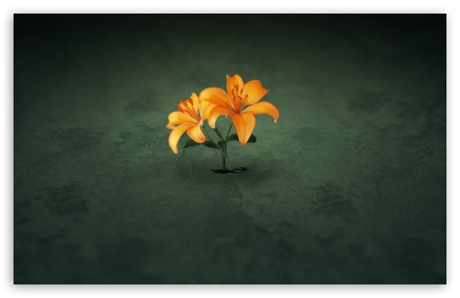 Creative Orange Flowers UltraHD Wallpaper for Wide 16:10 5:3 Widescreen WHXGA WQXGA WUXGA WXGA WGA ; 8K UHD TV 16:9 Ultra High Definition 2160p 1440p 1080p 900p 720p ; Standard 4:3 5:4 3:2 Fullscreen UXGA XGA SVGA QSXGA SXGA DVGA HVGA HQVGA ( Apple PowerBook G4 iPhone 4 3G 3GS iPod Touch ) ; Tablet 1:1 ; iPad 1/2/Mini ; Mobile 4:3 5:3 3:2 16:9 5:4 - UXGA XGA SVGA WGA DVGA HVGA HQVGA ( Apple PowerBook G4 iPhone 4 3G 3GS iPod Touch ) 2160p 1440p 1080p 900p 720p QSXGA SXGA ;