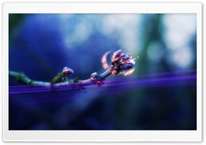 Creative Purple Flowers HD Wide Wallpaper for Widescreen