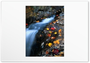 Creek Autumn HD Wide Wallpaper for Widescreen
