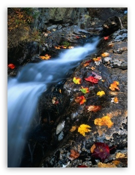 Creek Autumn ❤ 4K UHD Wallpaper for Mobile 4:3 5:3 3:2 - UXGA XGA SVGA WGA DVGA HVGA HQVGA ( Apple PowerBook G4 iPhone 4 3G 3GS iPod Touch ) ;