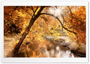 Creek, Autumn HD Wide Wallpaper for Widescreen