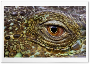 Crocodile Eye HD Wide Wallpaper for Widescreen