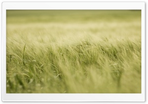 Crop Field Ultra HD Wallpaper for 4K UHD Widescreen desktop, tablet & smartphone