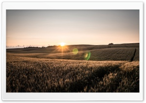 Crop Field Ultra HD Wallpaper for 4K UHD Widescreen desktop, tablet & smartphone