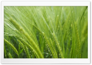 Cropland HD Wide Wallpaper for Widescreen