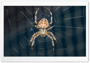 Cross Spider Ultra HD Wallpaper for 4K UHD Widescreen desktop, tablet & smartphone
