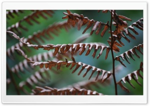 Crossing Dead Ferns Ultra HD Wallpaper for 4K UHD Widescreen desktop, tablet & smartphone