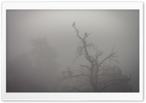 Crows, Tree, Fog Ultra HD Wallpaper for 4K UHD Widescreen desktop, tablet & smartphone