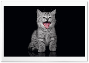 Cry Kitty HD Wide Wallpaper for Widescreen