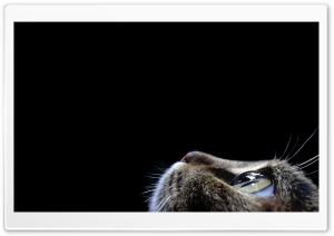 Curious Cat HD Wide Wallpaper for 4K UHD Widescreen desktop & smartphone