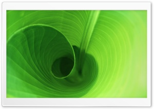 Curly Leaf HD Wide Wallpaper for Widescreen