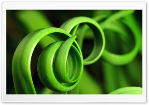 Curly Plant HD Wide Wallpaper for Widescreen