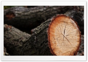 Cut Timber HD Wide Wallpaper for Widescreen