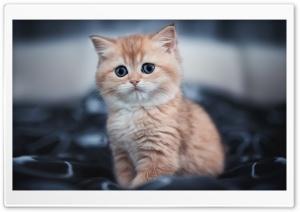 Cute Ultra HD Wallpaper for 4K UHD Widescreen desktop, tablet & smartphone