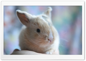 Cute Baby Bunny HD Wide Wallpaper for Widescreen