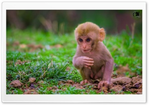 Cute Baby Monkey HD Wide Wallpaper for Widescreen