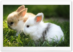 Cute Bunnies Ultra HD Wallpaper for 4K UHD Widescreen desktop, tablet & smartphone