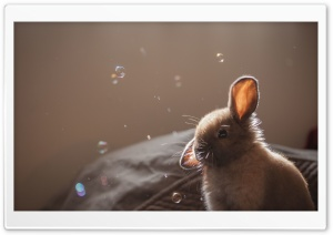 Cute Bunny Funny Face HD Wide Wallpaper for 4K UHD Widescreen desktop & smartphone
