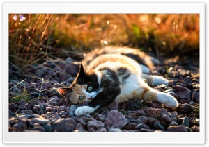 Cute Calico Kitten HD Wide Wallpaper for 4K UHD Widescreen desktop & smartphone