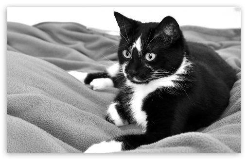 Cute Cat Black And White HD wallpaper for Wide 16:10 5:3 Widescreen WHXGA WQXGA WUXGA WXGA WGA ; HD 16:9 High Definition WQHD QWXGA 1080p 900p 720p QHD nHD ; Standard 4:3 5:4 3:2 Fullscreen UXGA XGA SVGA QSXGA SXGA DVGA HVGA HQVGA devices ( Apple PowerBook G4 iPhone 4 3G 3GS iPod Touch ) ; Tablet 1:1 ; iPad 1/2/Mini ; Mobile 4:3 5:3 3:2 5:4 - UXGA XGA SVGA WGA DVGA HVGA HQVGA devices ( Apple PowerBook G4 iPhone 4 3G 3GS iPod Touch ) QSXGA SXGA ;